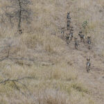 Remembering African Wild Dogs